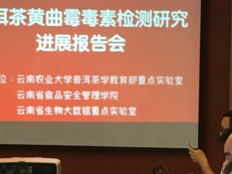 云南台都市频道都市条形码的直播:普洱茶跟黄曲霉毒素什么关系?