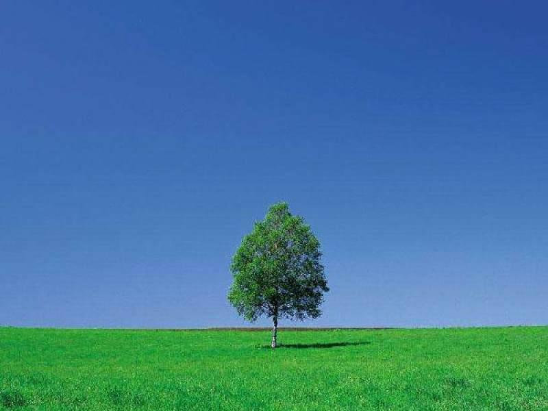 江西椲树股海风景区