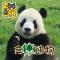 探秘 #大熊猫# 的端午节美食