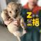 直播动物宝宝过儿童节 #大连森林动物园#  #Zoo直播#