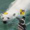 爱晒太阳的#北极熊#和#麦哲伦企鹅#