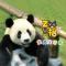 #大熊猫#金虎的生日Party现场,快来给它送祝福~