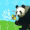 #大熊猫#妙音7周岁生日会——家有女神初长成 #大熊猫妙音#