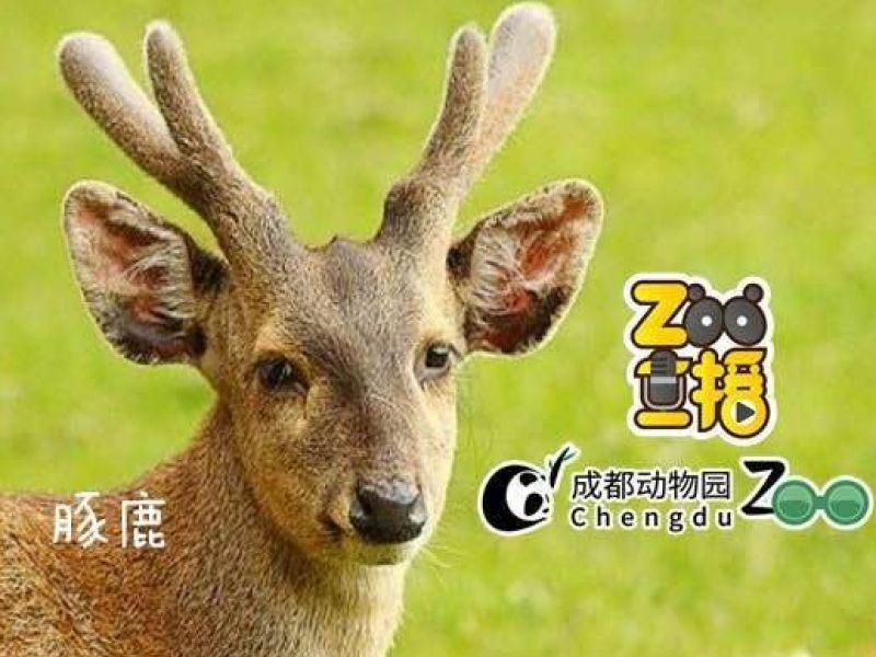 大连森林动物园正在直播