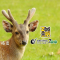 #成都动物园#科普游,动物知识讲解、亲子活动玩中学