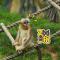 #川金丝猴#宝宝们的幸福生活