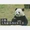 【直播:大熊猫伟伟12岁生日】走进武汉动物园,和大熊猫伟伟一起庆生,快来看。#江湖直播#
