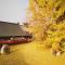 #华小商直播# 零距离赏古观音禅寺千年银杏 这个视角你肯定没见过