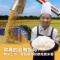 你真的会做饭吗?新米上市,看稻香如何修炼到米香