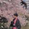 #带着微博赏樱花# 快来看发现君带你游京都赏樱花~