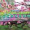河北卢龙第二届赏花节系列活动之桃花节#秦皇岛生活#