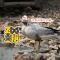 #守护斑头雁2018# 世界上飞的最高的鸟 #大连森林动物园#