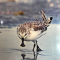 阿拉善SEE任鸟飞-湿地与濒危珍惜水鸟保护