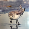 阿拉善SEE任鸟飞滨湖沙龙-湿地与濒危水鸟保护