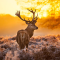 揭秘麋鹿传奇身世 从麋鹿的发展看生态的改善
