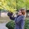 #韩国旅行# 在江原道洪川过周末,遇见最美银杏林!