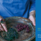 茹茹萍谈新书《不如做植物》 #一条美学实验室#
