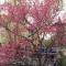 正是赏花好时节,兴庆宫公园内满园春色