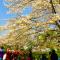 青龙寺樱花开了 赶紧约上小伙伴一起来赏樱花  #樱花#  #青龙寺#