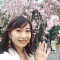 东京今天宣布樱花开花啦! 在上野公园直播十分钟^^