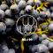 刘畅加州主题周三道酒第二期,一起看看除去纳帕,道长还帮我们发掘了哪些宝藏!#葡萄酒# #红酒#