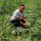 周至十万斤西瓜无人买,转发帮忙瓜农吧