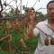 临潼斜口窑村一农民数百棵猕猴桃树被砍