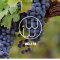 """澳洲向来以超成熟的浓郁葡萄酒闻名,但是今天来跟我们一起了解一下澳洲葡萄酒""""冷酷""""的一面!"""