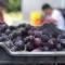 葡萄熟了,生活甜了!走!去葡萄文化节上吃葡萄、品葡萄、讲葡萄啦~