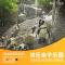 欢乐亲子乐园,玩转圣地亚哥动物园 #圣地亚哥环游记#