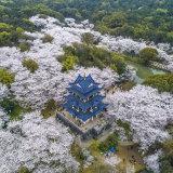 LiveChina-直播中国的头像