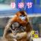 揭秘金丝猴功勋母亲🐒