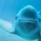 江豚博士带你探访江豚保护项目地