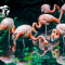 【直播:#非洲動物大遷徙#不止于野獸 高顏值鳥禽即將前方出沒】