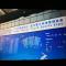 武汉青博会全景直播