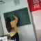 语文说课司马光