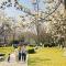藏不住了 西安环城公园白玉兰盛开 美出天际  #春天来赏花#